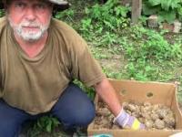 Poradnik sadzenia ziemniakow w workach na balkonie