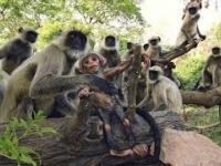 """Małpy opłakują """"śmierć"""" zrobotyzowanej małpy szpiegowskiej"""