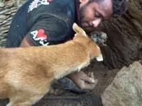 Matka pies pomaga ratownikom wykopać swoje zasypane szczenięta