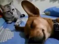 Pierdzenie psa sprawia, że kot jest zły
