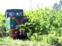 Pociąg wyłania się zza krzaków i chowa potem