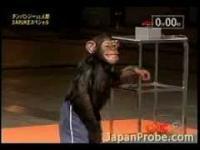 """Szympans pokonuje tor """"Ninja Warrior"""""""