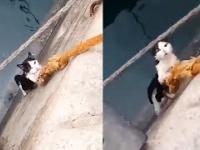 Kot uratowany z pomocą liny