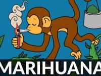 Jak zdelegalizowano marihuanę?