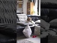 Wielki dramat w życiu psa