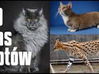 10 niezwykłych i zaskakujących ras kotów domowych