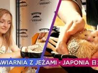 Kawiarnia z JEŻAMI - JAPONIA / Vlog. 11????