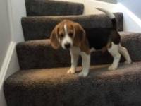 Piesek uczy się jak schodzić ze schodów