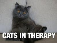 Koty na kozetce