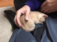 Kotek-bumerang - bez przerwy wraca na kolana właściciela