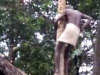 Jak nie ścinać drzewa - który to już raz?