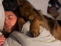 Pies zabezpiecza swojego człowieka w czasie spania