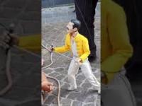 Występ Freddiego Mercury