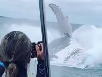 Wieloryb wyskakuje z wody bardzo blisko statku