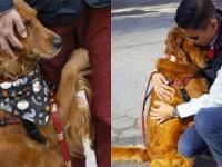 Loubie - pies uwielbiający przytulać ludzi na ulicy