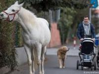 Klacz Jenny - od 14 lat samotnie spaceruje ulicami Frankfurtu