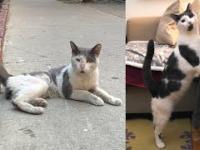 Uliczny bezdomny kot dostaje nowe życie