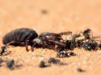 Pająk kontra mrówki