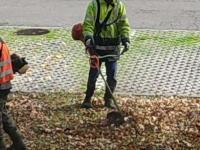 Mieszkaniec Katowic poprosił o uprzątnięcie suchych liści. Oto, co stało się potem