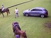 Właśnie dlatego nigdy nie należy zachodzić konia od tyłu