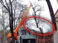 Niesamowite szybkie umiejętności usuwania starych i niebezpiecznych drzew