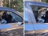 Weź tu człowieku zostaw otwarte okno w samochodzie...