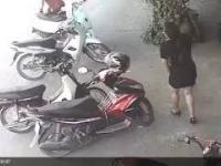 Nietypowa kradzież kota w Wietnamie