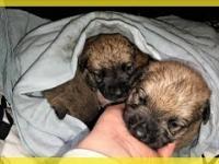 Bezdomna sunia urodziła szczeniaki w norze.