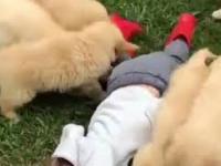 Zdziczała horda psów goni małego chłopca