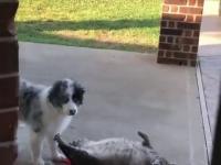Pies nie pozwala przemienić się kotu w fokę