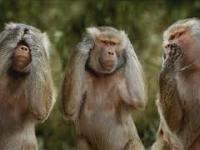 Kwinto - Trzy małpy w zoo( Trance mix 2020 )_ & wokal Tiger Bonzo trance kwintotv bonzo