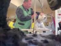 Fryzjer dla psów - Częstochowa