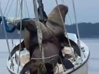 Z dziennika jachtowego