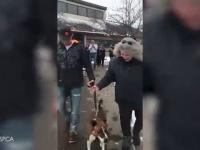 Pies ze schroniska cieszy się z adopcji