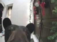 Niedźwiedź dzwoni do drzwi na Florydzie w domu