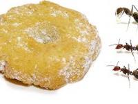 Co stanie się z ciasteczkiem, jeśli przygarnę je mrówki