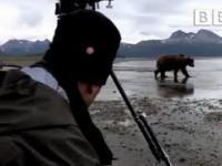 Wielki Grizzly 10 metrów od kamerzysty jak się zachować?