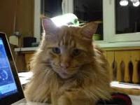 Kotek Karotek przy komputerze