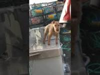 """Pies i jego """"Morskie Nogi"""""""