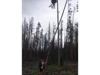 Nigdy nie drażnij drzewa, bo będzie bardzo źle