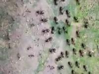 Zimna wojna pomiędzy termitami i mrówkami