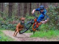 DOWNHILL Vs DOGS