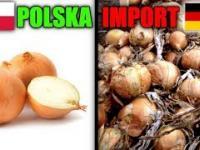 Wkurzony rolnik porównuje swoją cebule z importowana z Niemiec i Holandii