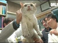 Kotka w Korei przez 2 lata była uwięziona w ścianie