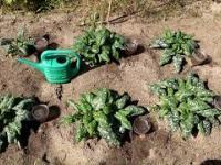 Oszczędność wody przy podlewaniu do 90%