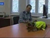 Yorki w służbie czeskiej policji