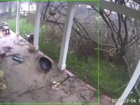 Szybka demolka w ogrodzie