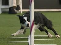 Pink - pies szybki i zwinny
