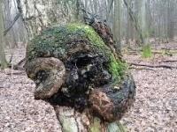 Magia Natury - Głowa Barana w Lesie
