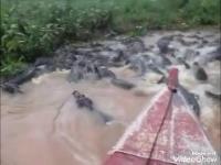 Wycieczka rzeką pełną krokodyli